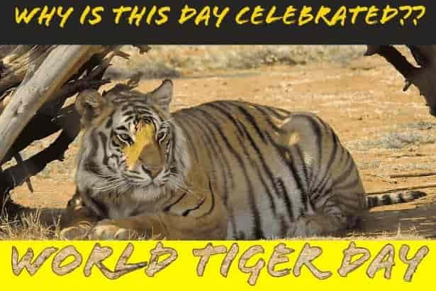 International Tiger Day 2020: Know it's history and how this special day is celebrated